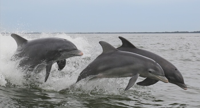 HIlton-Head-Island-Dolphin-Watch